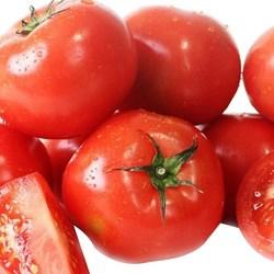 농협 완숙 토마토